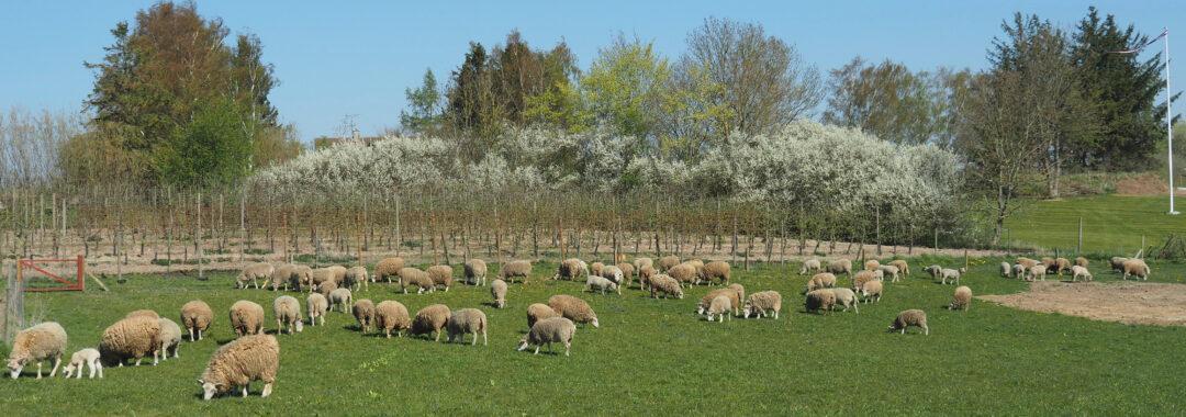 Fra Marken på Tolykkegård, økologisk landbrug
