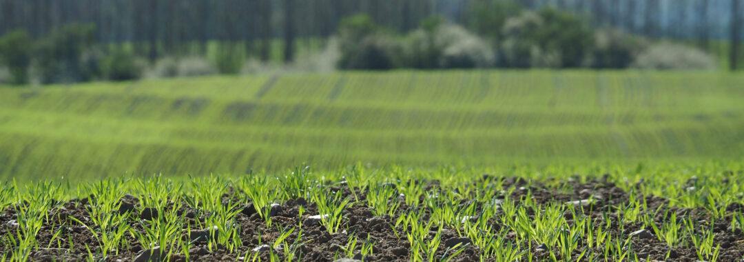 Økologisk landbrug Tolykkegård økologi