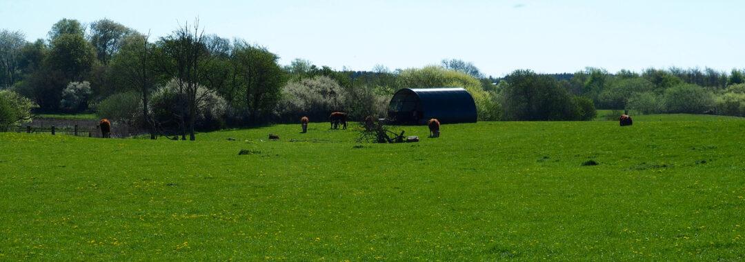 Kom med på gårdvandring på det økologiske landbrug Tolykkegård