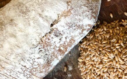 hjemmebagt surdejsbrød kornkværn surdej opskrift